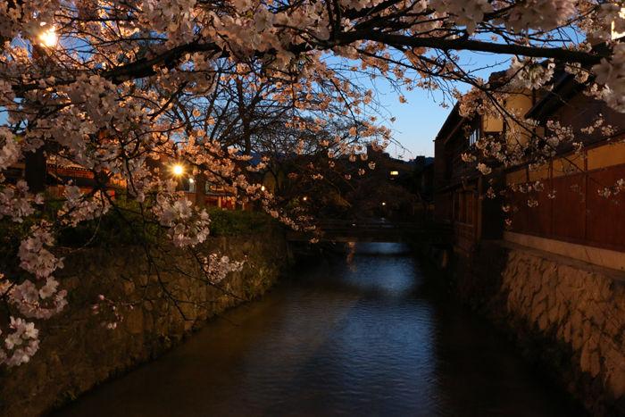 京都・東山区・祇園白川20160402-2