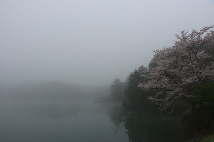 京都・福知山市・三段池公園20160406-2