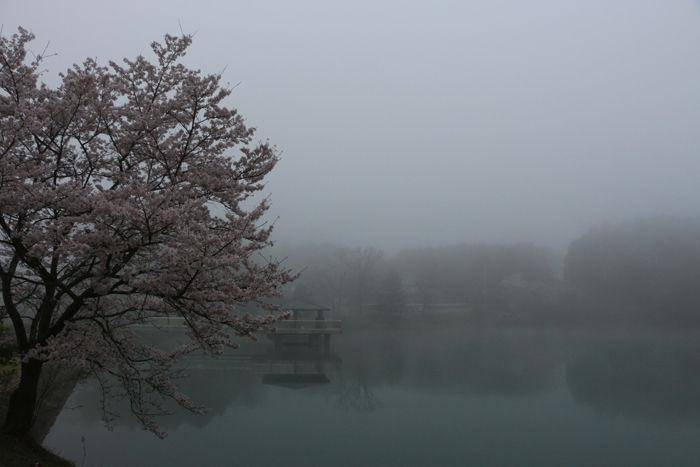 京都・福知山市・三段池公園20160406-1