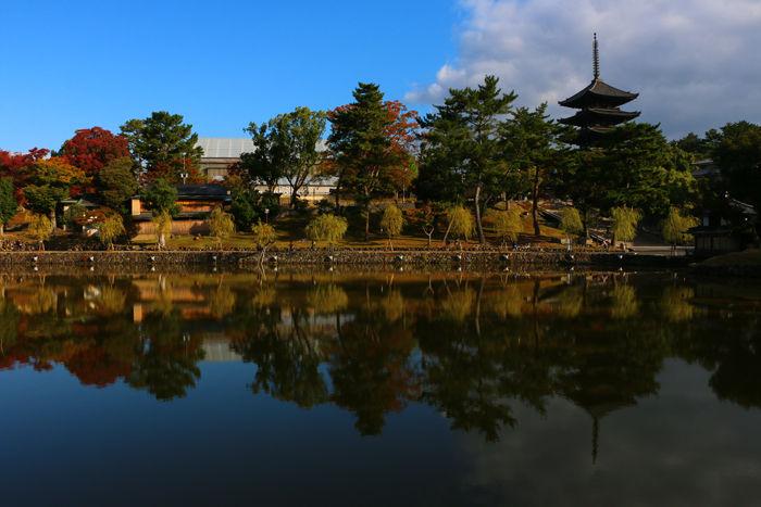 奈良・奈良市・奈良公園20141104-12