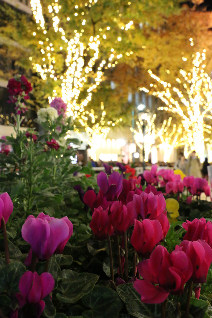 兵庫・中央区・神戸ルミナリエ20151208-1