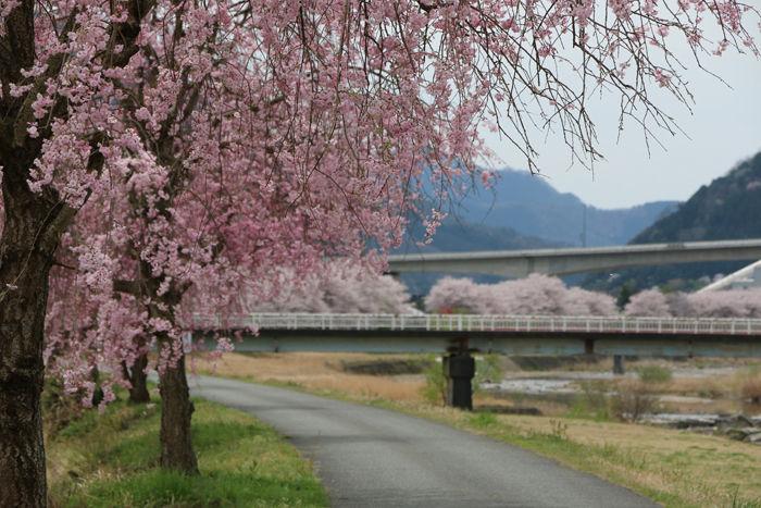 兵庫・朝来市・和田山町枚田地区20160406-4