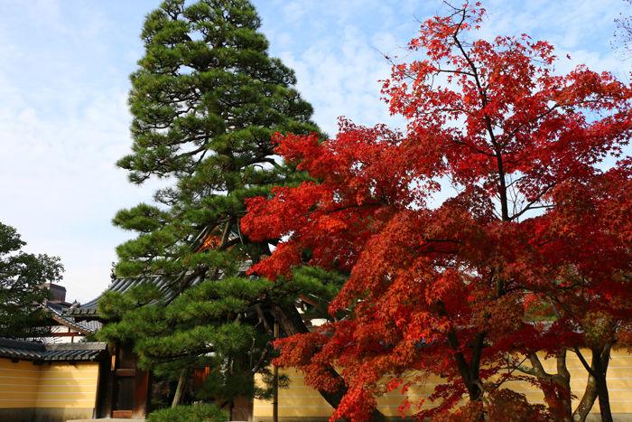 京都・北区・等持院20151121-1
