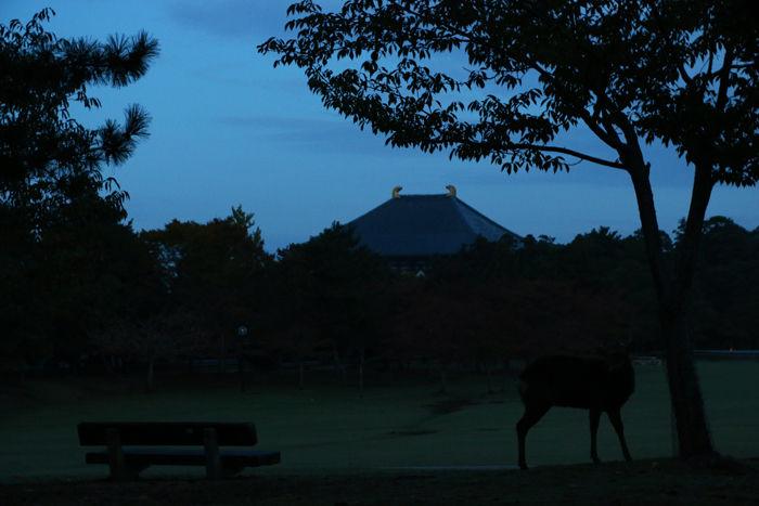 奈良・奈良市・奈良公園20141104-1