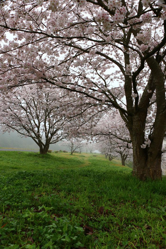 京都・福知山市・新音無瀬橋20160406-4