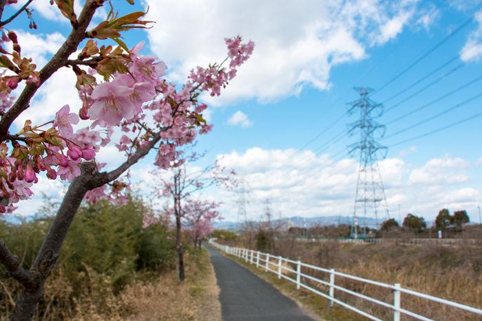 大阪・枚方市・自然巡回道路20170310-1