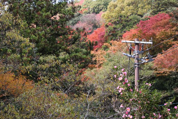 大阪・箕面市・箕面の滝20131120-2-9