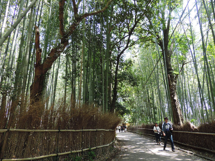 京都嵐山竹林の道2