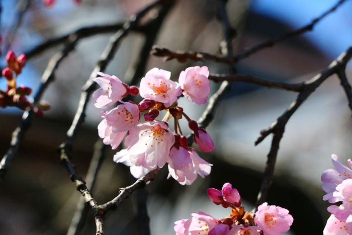 京都・東山区・祇園白川20160321-4