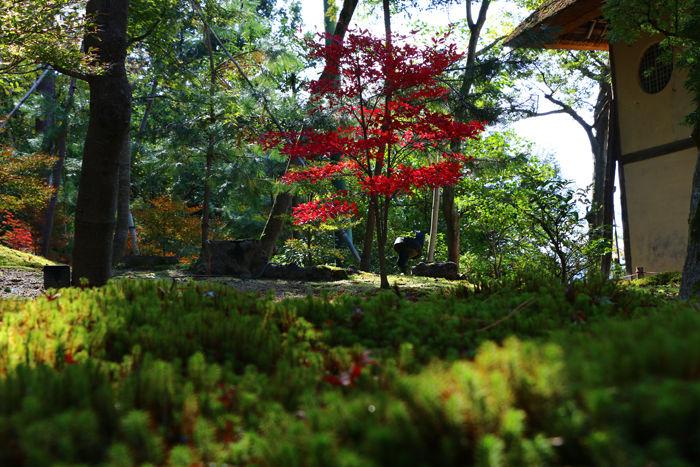 京都・東山区・高台寺20151116-8