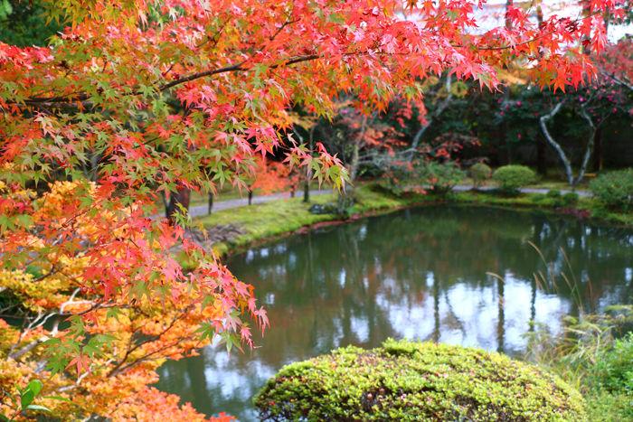 京都・北区・等持院20151121-10