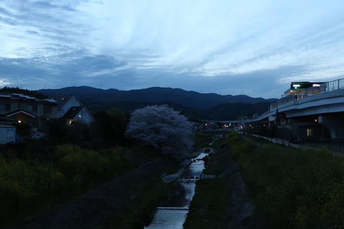 京都・長岡京市・新川向橋20160406-2