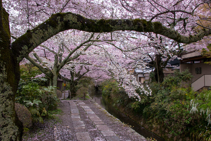 京都・左京区・哲学の道20170412-4