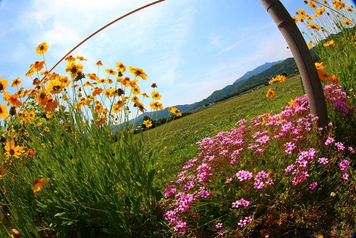 京都・右京区・【魚眼風景】広沢池界隈20150527-2