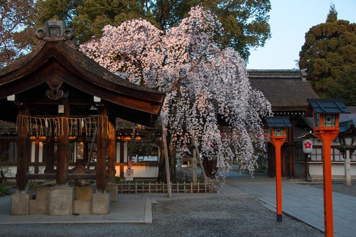 京都・北区・平野神社20170404-3