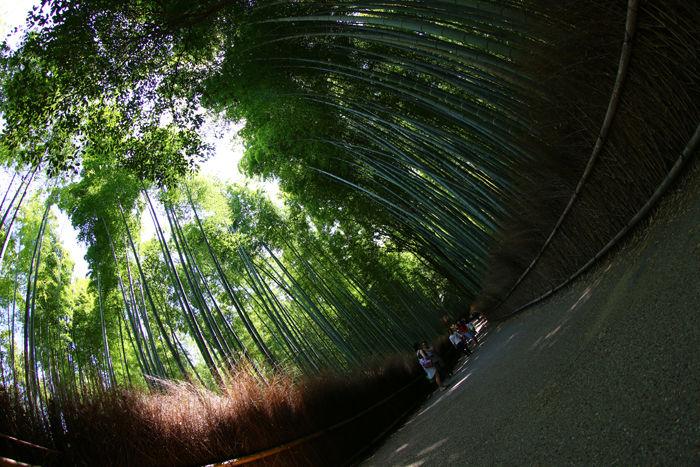 京都・右京区・【魚眼風景】嵐山竹林の道20150527-5