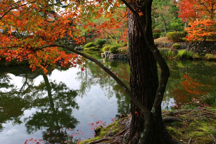京都・北区・等持院20151121-13