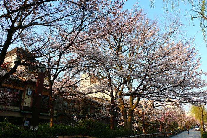 京都・東山区・祇園白川20150331-1