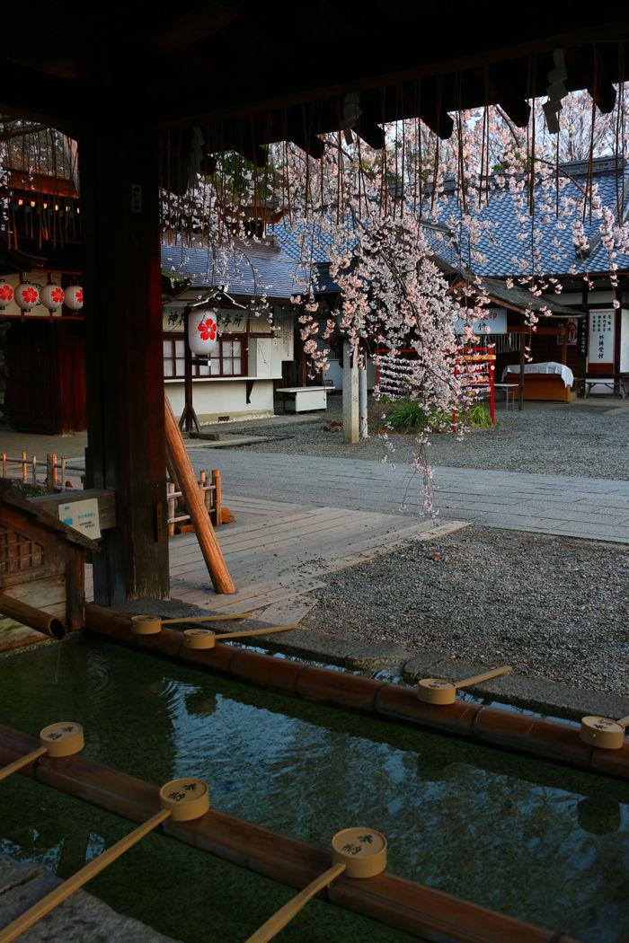 京都・北区・平野神社20160330-5