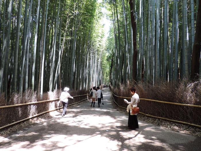 京都嵐山竹林の道8