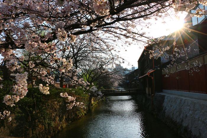 京都・東山区・祇園白川20150331-8