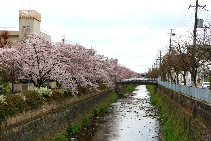 京都・右京区・天神川四条交差点20160402-1