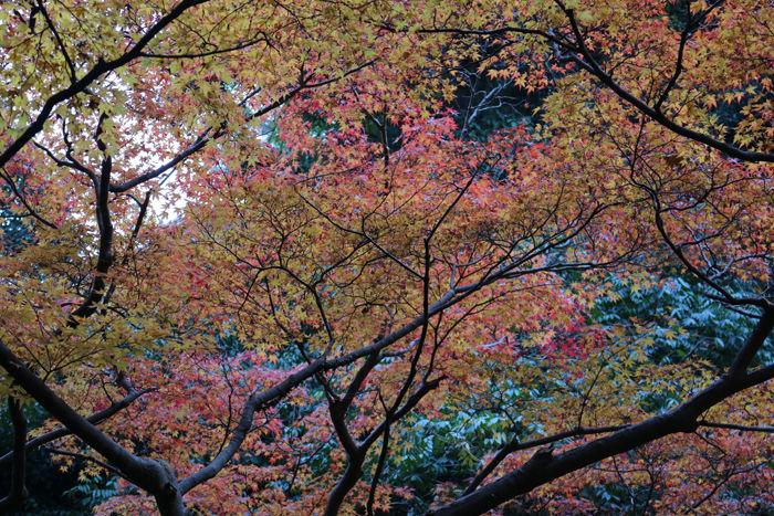 大阪・箕面市・箕面の滝20131120-1-4