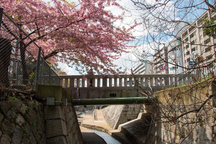 京都・上京区・一条戻橋20170322-4