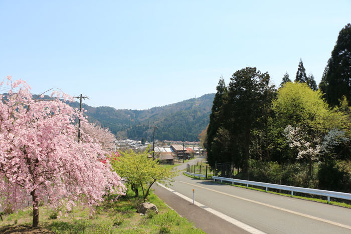 滋賀・長浜市・西浅井町八田部地区20160412-3