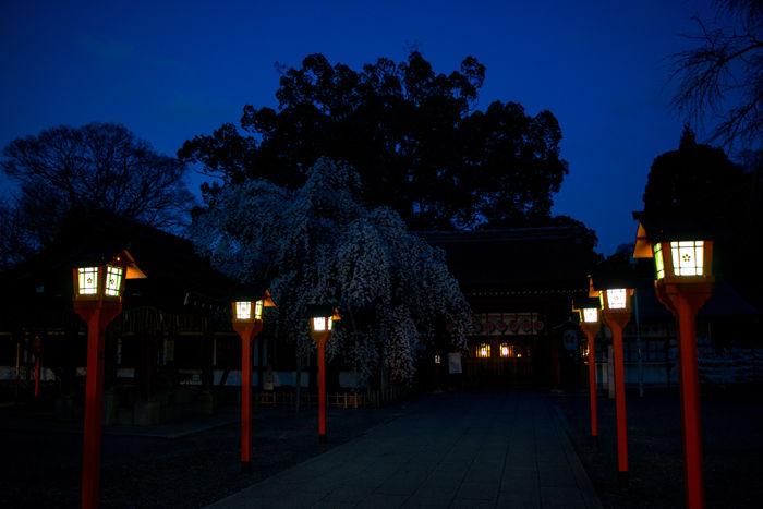 京都・北区・平野神社20170404-1