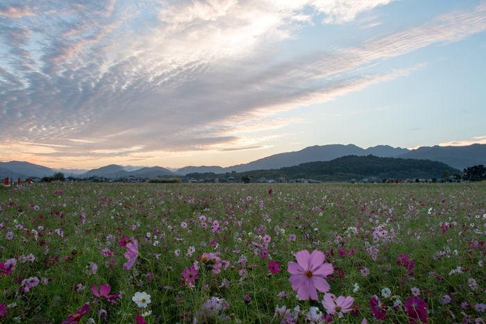 奈良・橿原市・藤原宮跡(朝景)20161010-6