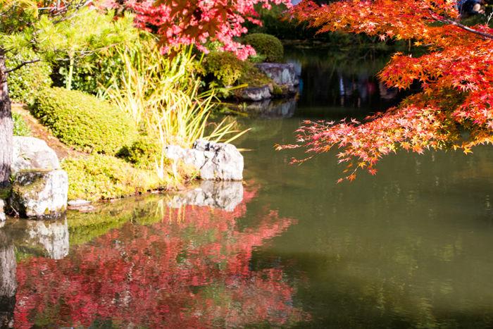 京都・北区・等持院20161116-5