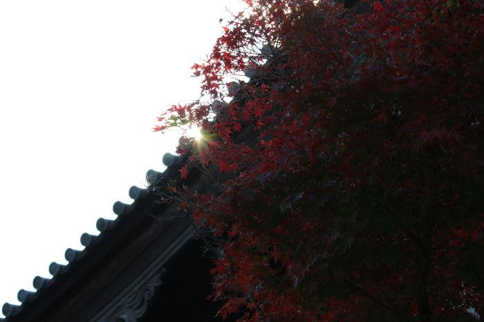 京都・東山区・臨済宗大本山東福寺20131121-1-5