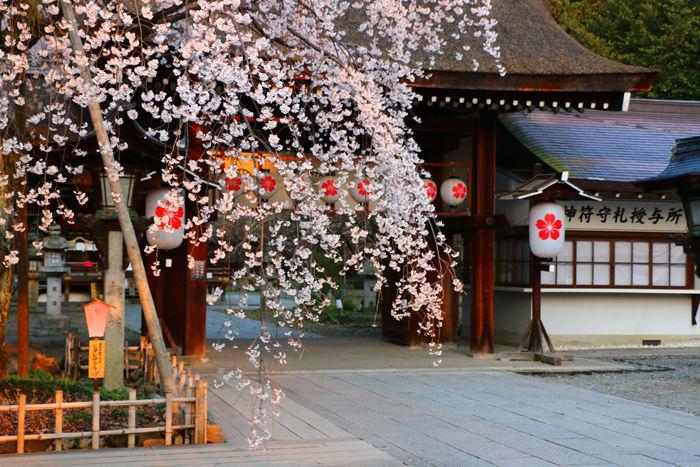 京都・北区・平野神社20160330-6