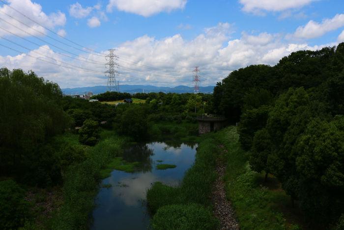 大阪・枚方市・山田池公園20150621-10