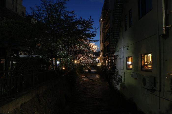 京都・東山区・祇園白川20160402-1