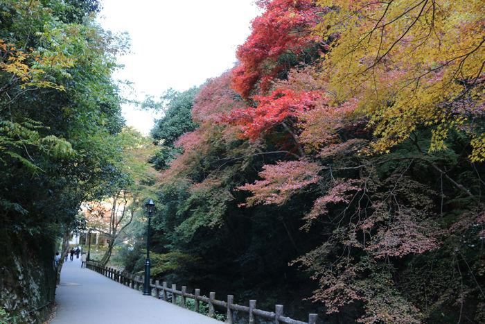 大阪・箕面市・箕面の滝20131120-1-7