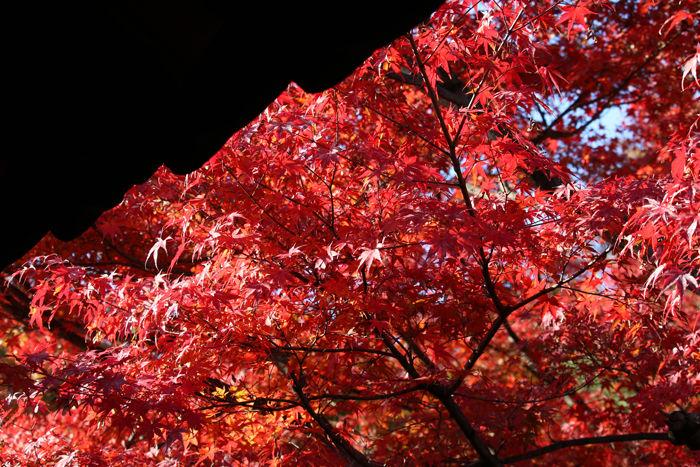 京都・東山区・臨済宗大本山東福寺20131121-2-1