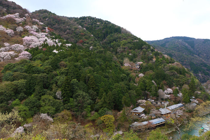 京都・右京区・嵐山公園亀山地区20160402-4
