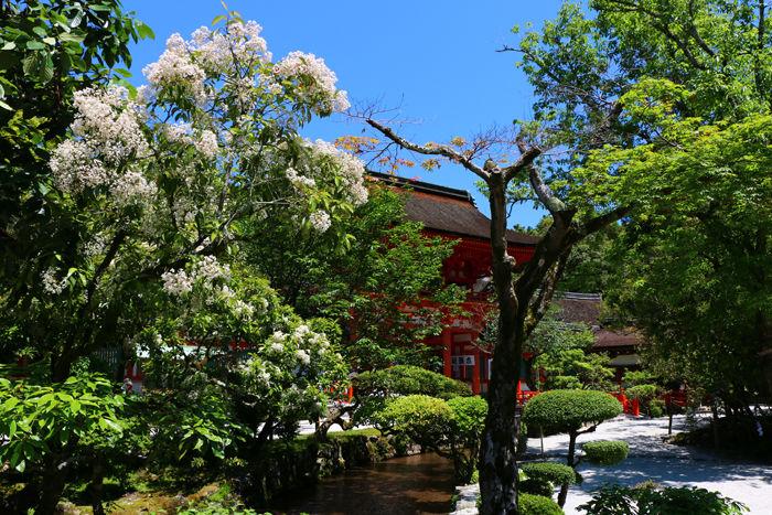 京都・北区・賀茂別雷神社(上賀茂神社)20160512-6