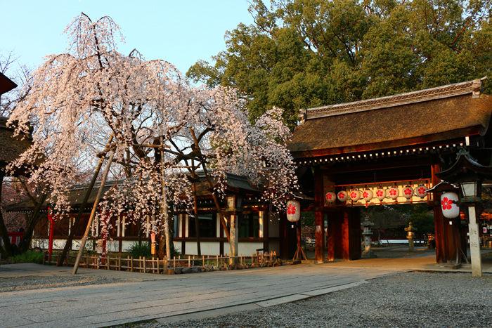 京都・北区・平野神社20160330-9