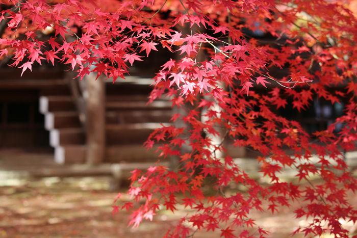 京都・左京区・真正極楽寺【真如堂】20131121-1-7