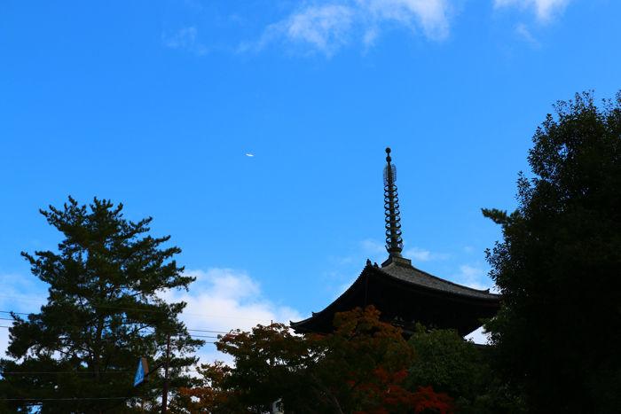 奈良・奈良市・奈良公園20141104-11