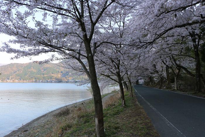 滋賀・高島市・海津大崎20160412-4