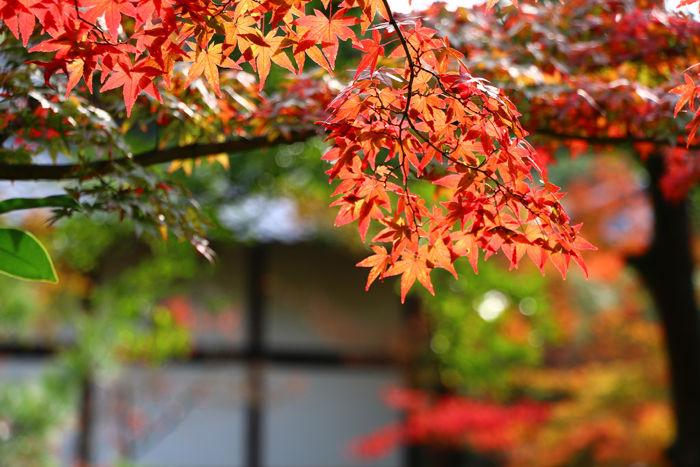 京都・北区・等持院20151121-6