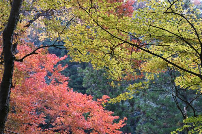 大阪・箕面市・箕面の滝20131120-1-11