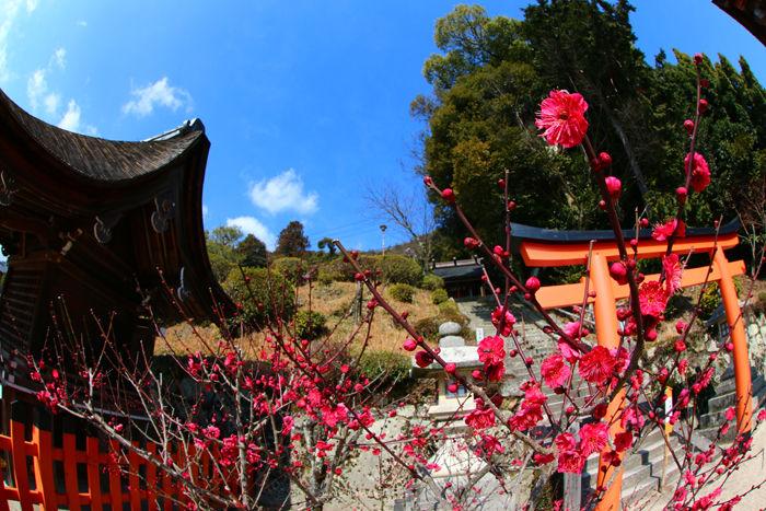 滋賀・高島市・【魚眼風景】白鬚神社20160219-2