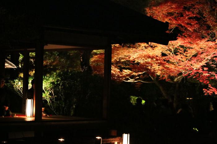 京都・東山区・天台宗青蓮院門跡20131123-1