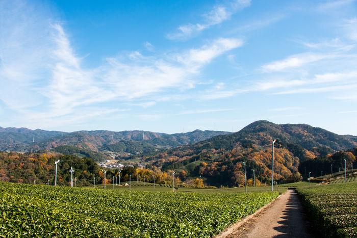 京都・相楽郡和束町・大字白栖地区20161202-3