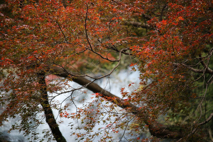 大阪・箕面市・箕面の滝20131120-2-3